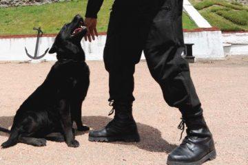 sécurité de animal